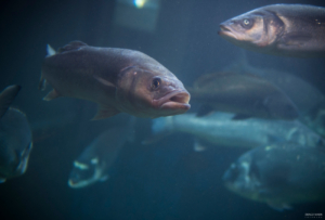 Akvarij Piran.